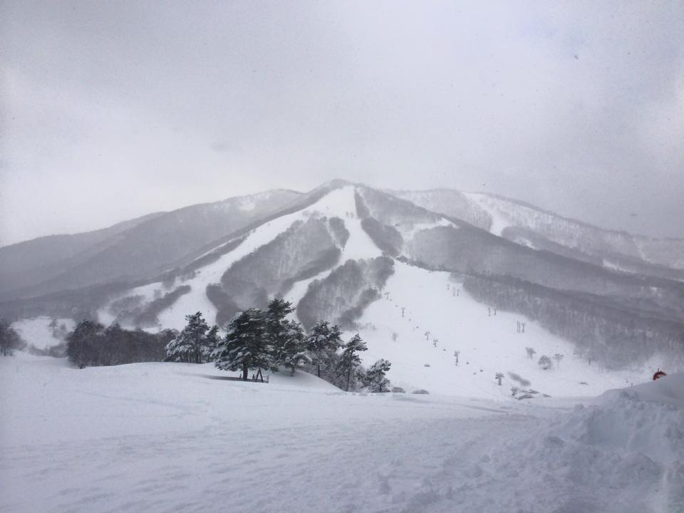 Myoko Snow Report 03 January 2015