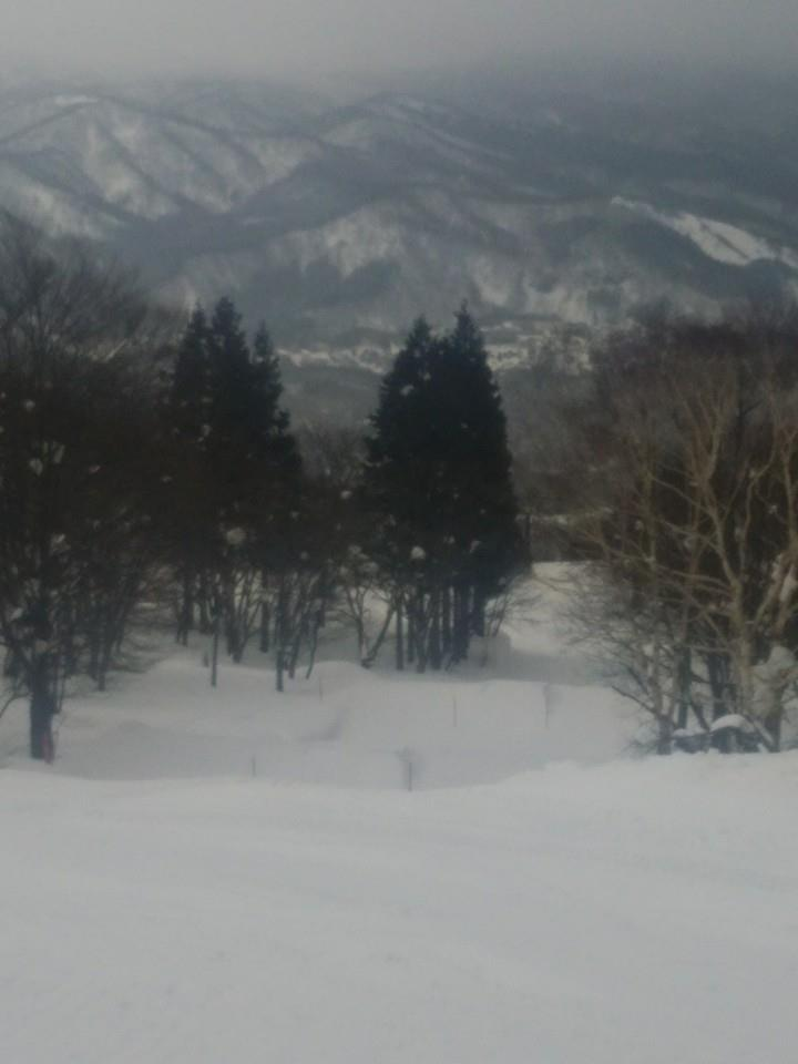 Myoko Snow Report - 23 January 2015