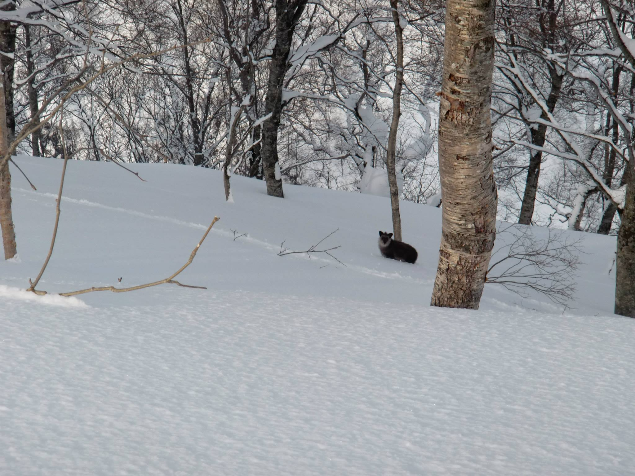 Myoko Snow Report 08 February 2015