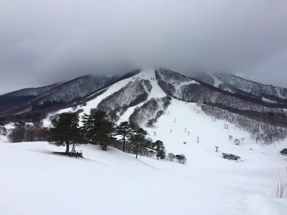 Myoko Snow Report 19 March 2015