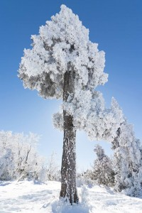 Myoko Snow Report 21 December 2015