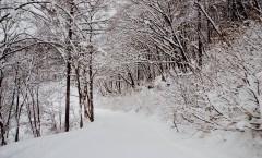Myoko Snow Report 2 March 2016
