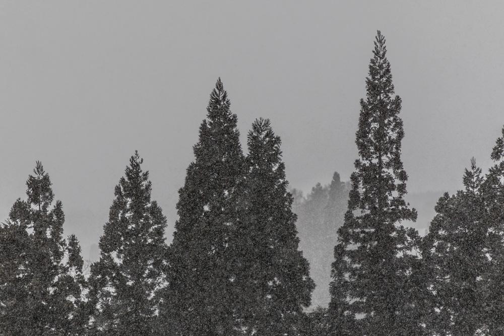 Myoko Snow Report 10 January 2018