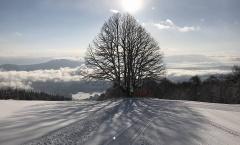 Myoko Snow Report 5 February 2018